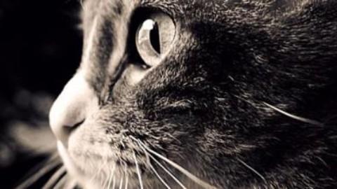Condanna da record per le bastonate contro il gatto: quattro mesi di … – il Giornale