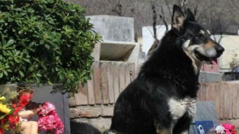 Addio a Capitàn, il cane che ha vegliato per oltre 10 anni sulla … – La Repubblica