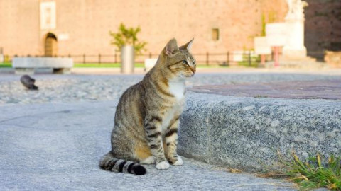 Gatto mania, ora anche un festival per gli amanti dei felini – La Sicilia