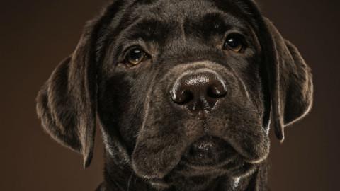 """Puppy Eyes: nell'anno del cane tornano gli """"occhi da cucciolo"""" – Glamour.it"""