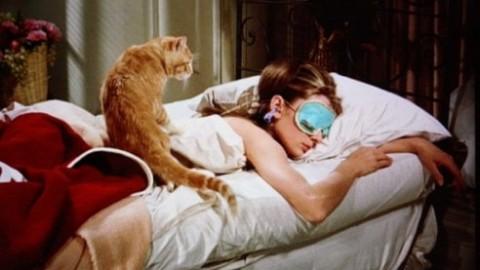 Giornata nazionale del gatto: 16 film per festeggiarla davanti alla tv – La Repubblica