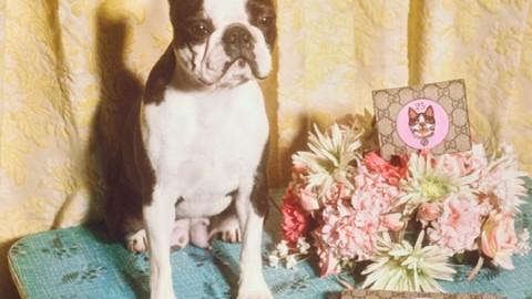 Gucci celebra l'anno (cinese) del Cane con una collezione dedicata – Corriere della Sera