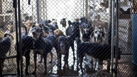 """Obolo di 100 euro a cane una tantum. """"Così non si combatte il … – Quotidiano.net"""