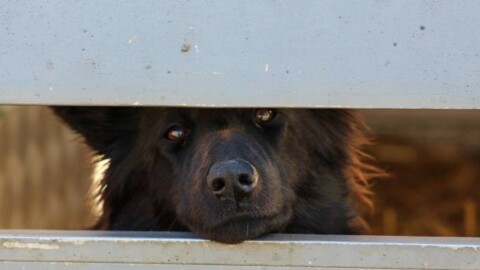 Sciacca. Enpa sterilizzerà i cani di proprietà, l'Asl penserà ai randagi – Quotidiano.net