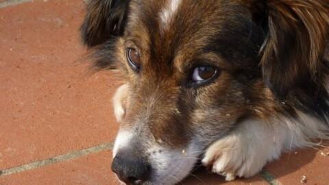 """Sanità veterinaria: """"Il diritto all'affetto non deve essere penalizzato"""" – Quotidiano.net"""