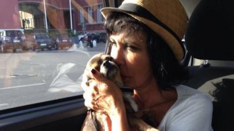 """""""Un colpo di fulmine a 4 zampe"""" per adottare cani e gatti nel giorno … – Il Messaggero"""