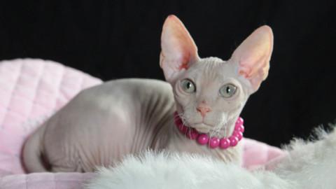 Oggi la giornata del gatto, a Venezia in arrivo i mici più belli del mondo – Il Gazzettino