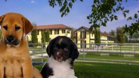 Villa Sant'Uberto: Patentino del cane buon cittadino – LegnanoNews