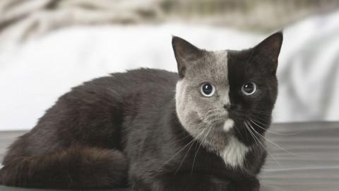 Gatto con la testa divisa a metà: lo scatto fa il giro del mondo [FOTO] – Velvet Pets