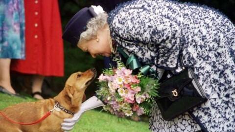 """Bimbo scrive alla regina Elisabetta, """"Maestà mi regala un cane?"""" Lei … – Il Giorno"""