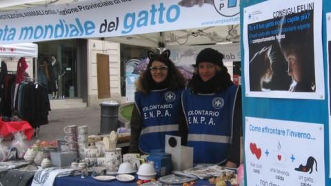 Giornata Mondiale del Gatto tutte gli eventi in città – Giornale di Monza
