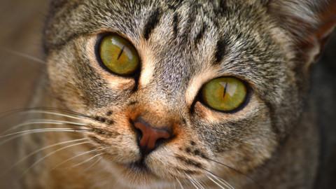 Malattie dei gatti: ecco sintomi, cure e prevenzione delle principali – NanoPress