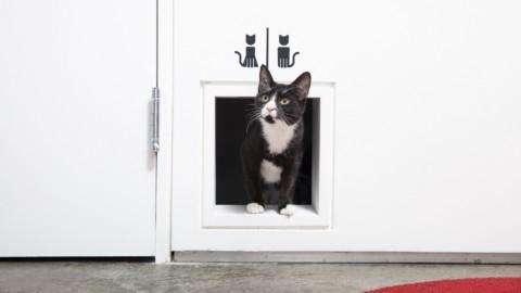 5 cose da sapere per portare i gatti in aereo – FullTravel.it