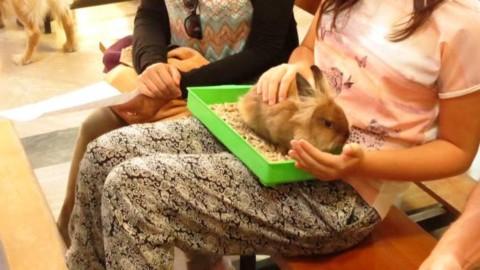 Ok a protocollo per l'accesso degli animali domestici negli hospice – Il Vostro Giornale