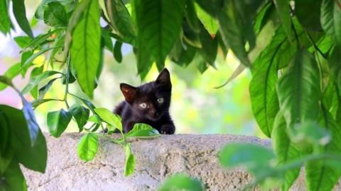 Le piante pericolose per il gatto – tio.ch