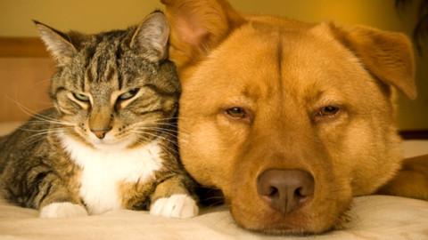 Animali domestici in calo. – Today