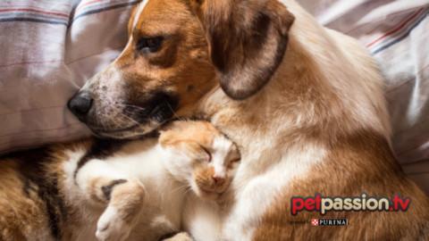 Perché è sbagliato umanizzare cane e gatto? – Petpassion.tv