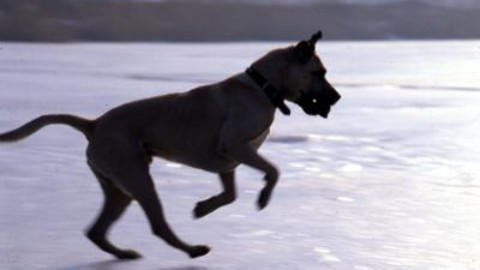 Come proteggere cani e gatti dal gelo di Burian – Adnkronos