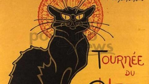 Il gatto fa la festa a noi, servitori umani Il 17 febbraio è il giorno dell … – Positanonews