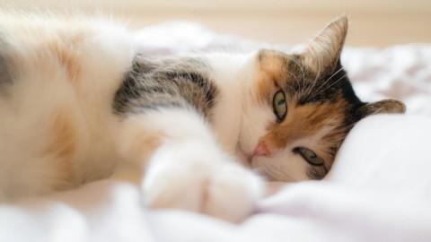 Eurispes: il 53% dei proprietari dorme nel letto con i propri animali … – Il Secolo XIX