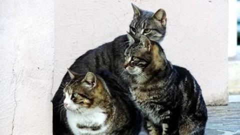 Una ventina i gatti aiutati a Turriaco dalla Cuccia Onlus nel 2017 – Il Friuli