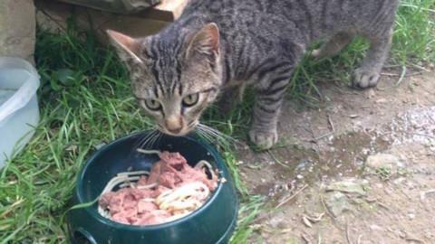 Festa del Gatto, l'Enpa invita ad aiutare i gatti delle colonie feline … – Il Vostro Giornale