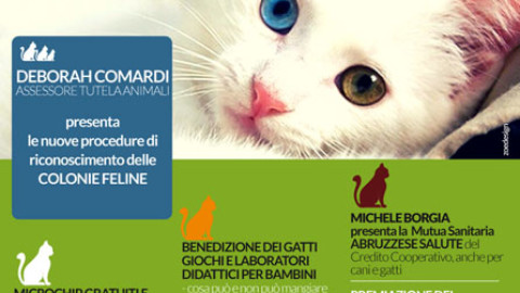 Festa Nazionale del Gatto 2018 a Montesilvano – Abruzzonews