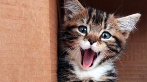 A Montesilvano la seconda edizione della Festa Nazionale del Gatto – IlPescara