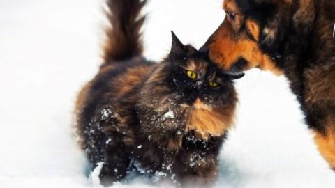 Come proteggere gli animali dal freddo – Brescia Settegiorni – Brescia Settegiorni