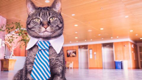 Gatti in condominio: regole – La Legge per Tutti