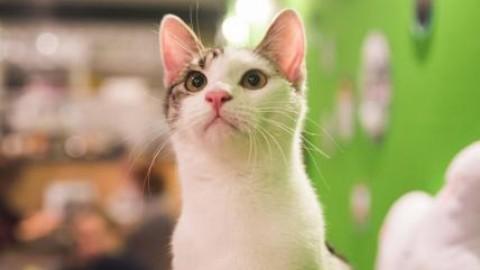 Festa del gatto: 5 regole per portarli in aereo e 5 Cat Café da visitare – Affaritaliani.it