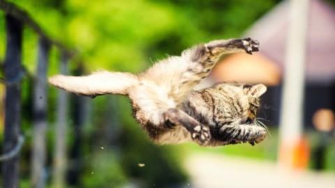 10 miti e verità sui gatti – greenMe.it