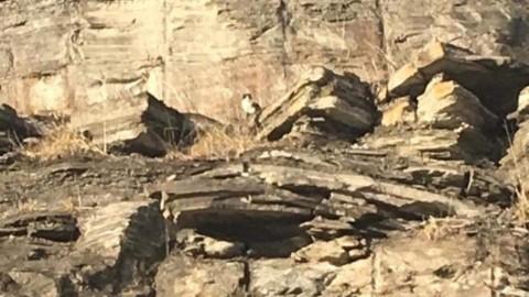 Gatto aspetta i soccorsi 11 giorni su una scogliera a trenta metri d … – Il Secolo XIX