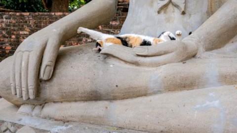 L'antica leggenda buddista sui gatti – greenMe.it