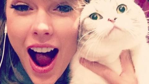 Giornata nazionale del gatto: ecco come festeggiare il tuo micio – Io Donna
