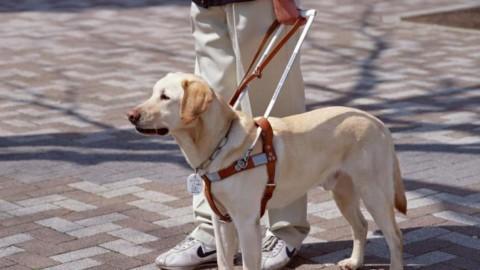 Il calendario del cane Lola regala un cane guida ad un non vedente … – Ravennanotizie.it