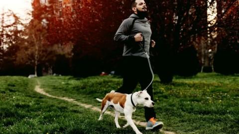Assicurare il proprio animale domestico: vantaggi e costi – NapoliToday