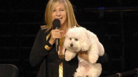 Barbra Streisand e la controversa clonazione del suo cane – National Geographic Italia