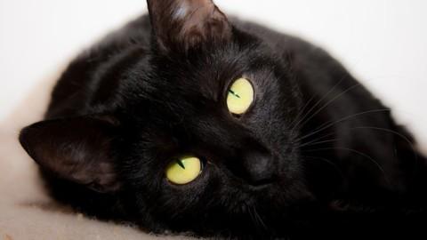 Spagna, uccide il gatto nella lavatrice e pubblica video online – il Giornale