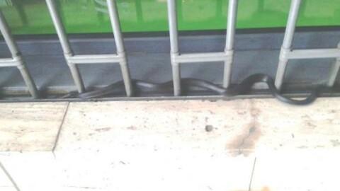 Catania, panico per un serpente in viale Jonio: recuperato dai vigili … – La Sicilia