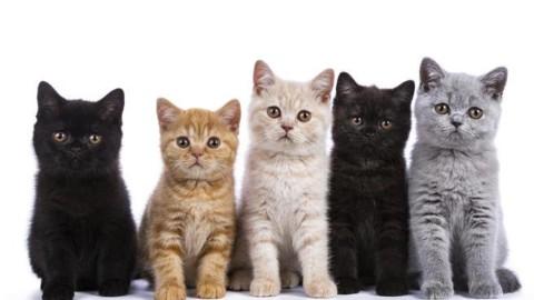 Un po' maghi, un po' acrobati: i gatti da «maledetti» a signori del web – Corriere della Sera