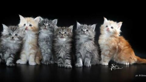 'Un gatto per amico': un concorso fotografico aiuta i mici … – La Nazione