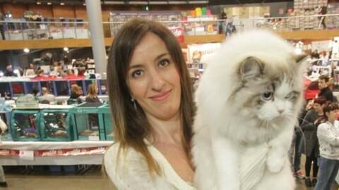 Firenze, gli amici gatti in mostra all'Obihall: eccoli con i loro padroni … – La Nazione