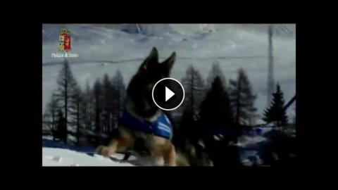 Moena: il lavoro che svolgono i cani poliziotto – YouReporter