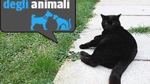 I gatti del Cimitero Monumentale hanno cinque tutor e fan tra i turisti – Corriere della Sera