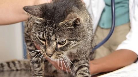 Parassiti interni ed esterni del gatto – Vivere Fermo