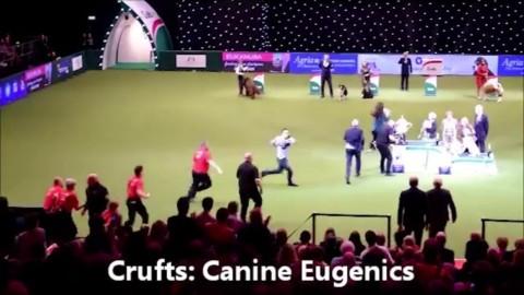 Gb, si premia il miglior cane dell'anno: animalisti fanno irruzione e … – La Repubblica