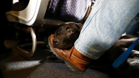 Cani in volo, ancora una disavventura: cucciolo fa il giro degli Usa … – Rai News