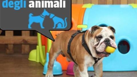 Milano, la cuccia dell'«asilo» per cani in diretta nel parco Sempione – Corriere della Sera