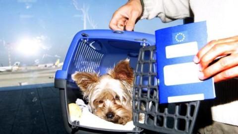 In volo con cani, gatti e altri animali: ecco tutto quello che c'è da … – Corriere della Sera